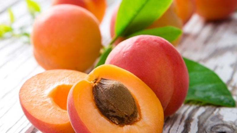 The Numerous Benefits of Eating Apricots During Pregnancy