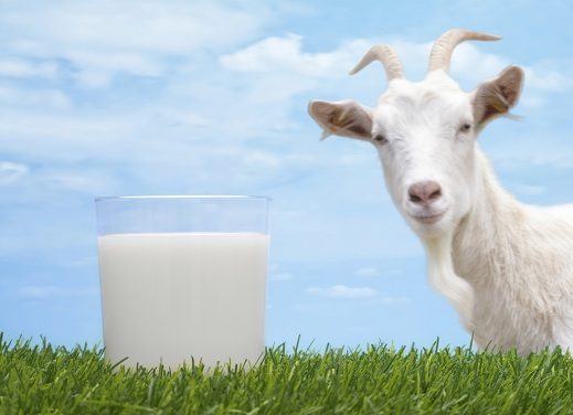 home remedies to reduce dengue fever - goat milk