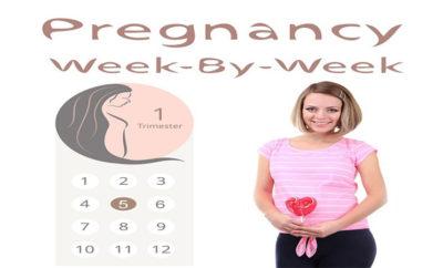 Fifth week of Pregnancy