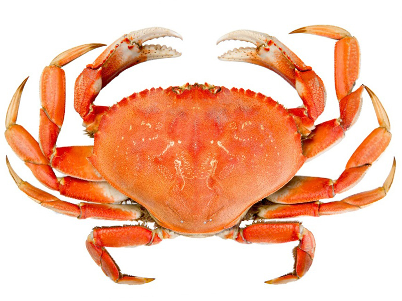 Things To Know Before Eating Crab During Pregnancy Styles At Life