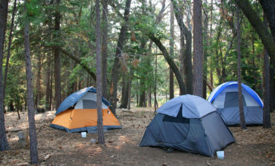 forest camp grounds
