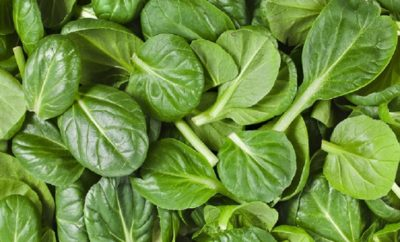 Spinach during pregnancy