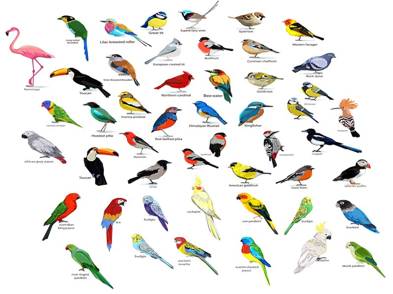 25 Different Types Of Birds Bird Species With Names And Pictures