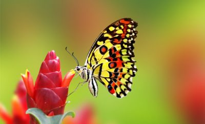 Types Of Butterflies Names 25 Most Colorful Butterfly