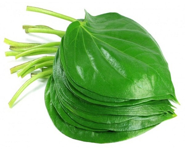 Looking For The Great Benefits Of Betel Leaf During Pregnancy?