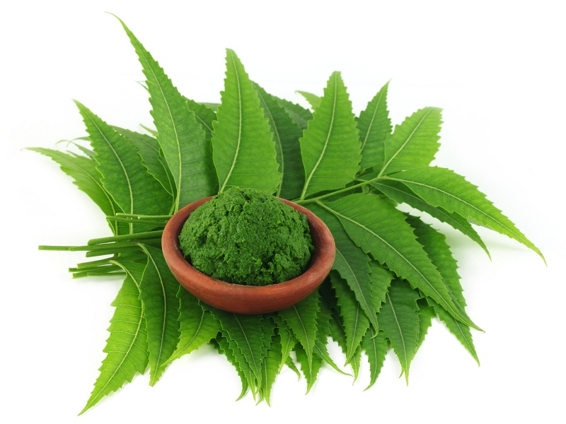 Neem Powder Benefits: 16 Best List For Health, Hair & Skin