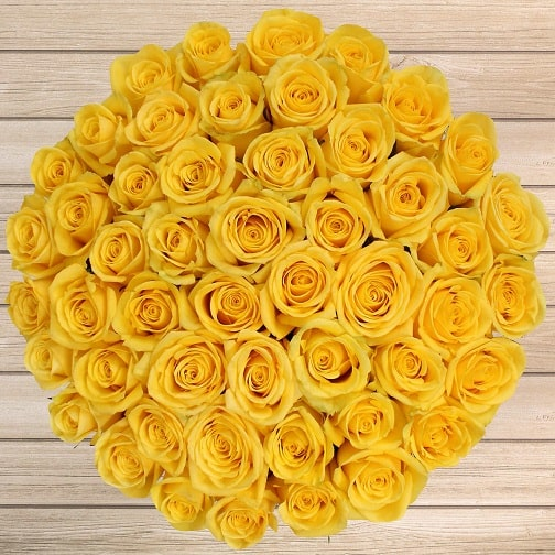 Types Of Roses Names 15 Colorful Rose Varieties In India