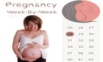 twenty eight weeks pregnant