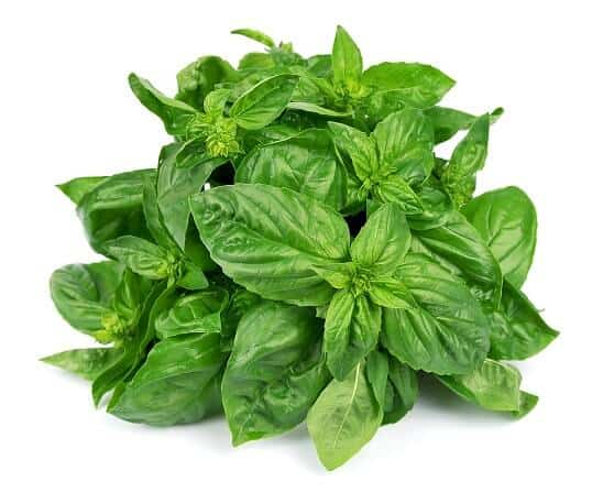 basil leaves as home remedy for food poisoning