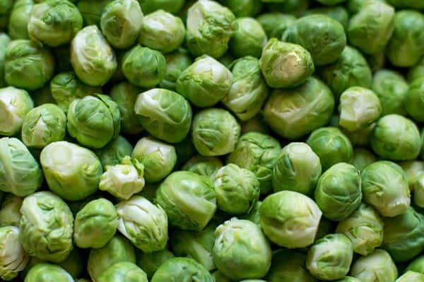 Brussels Sprouts to Grow Tall