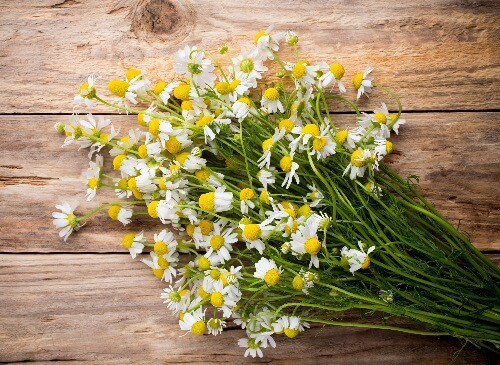 chamomile as home remedy for migraine