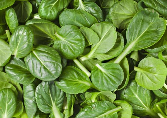 Spinach to Increase Height Fast