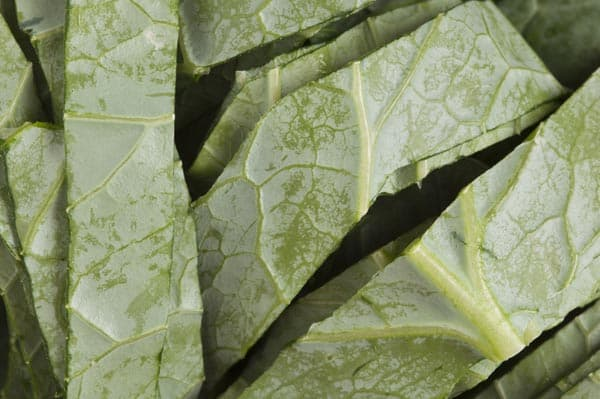 Collard Green Vegetables to Grow Height Fast