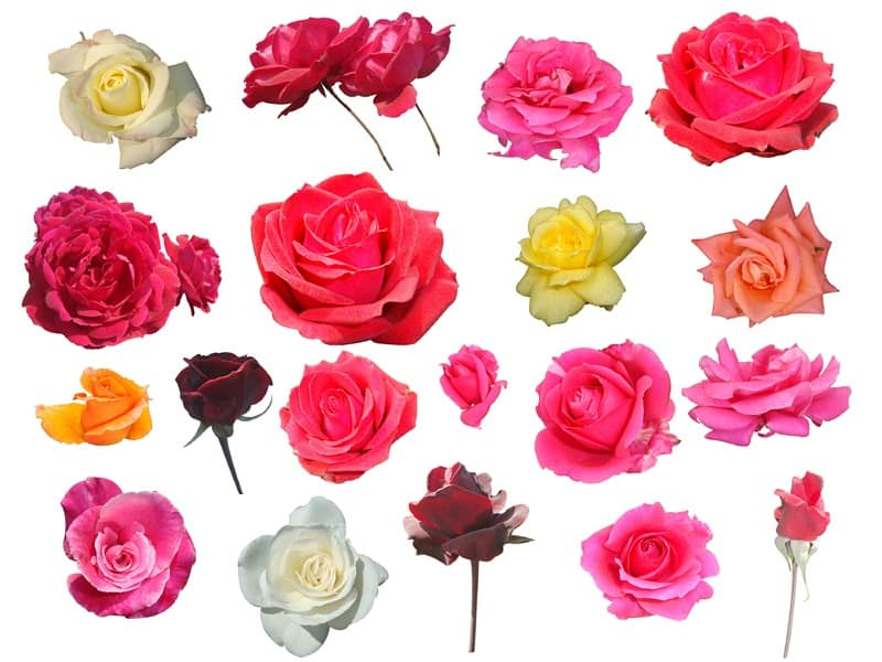 Different Types Of Flowers: Colours, Names, Meanings And